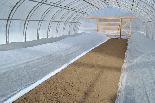 Inside the large hoophouse, all but one bed is planted.